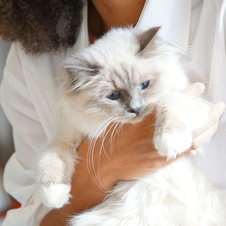 Cat Ipsum, anyone?